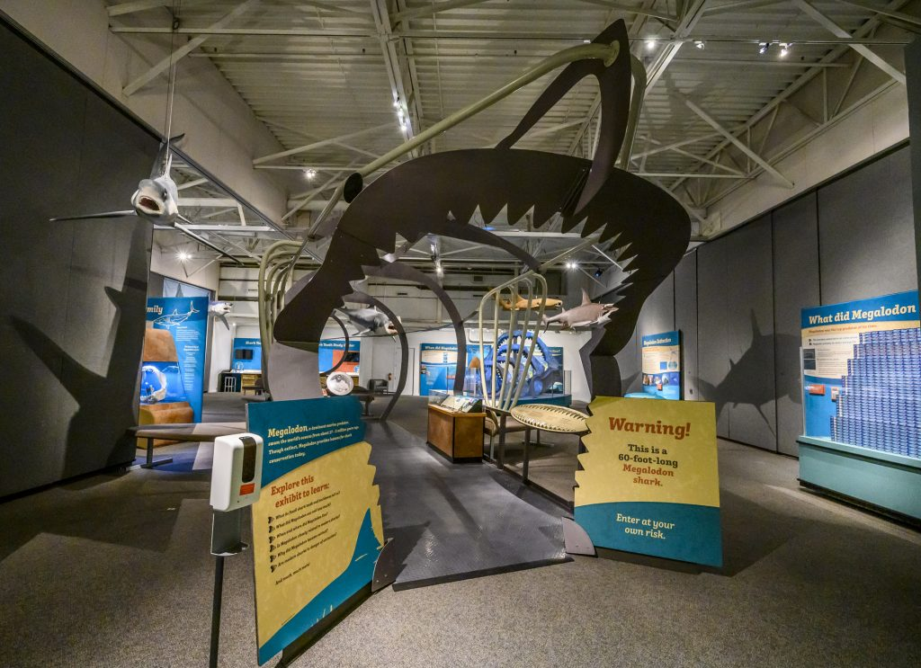 jaw entrance to a large shark shaped structure in a museum exhibit