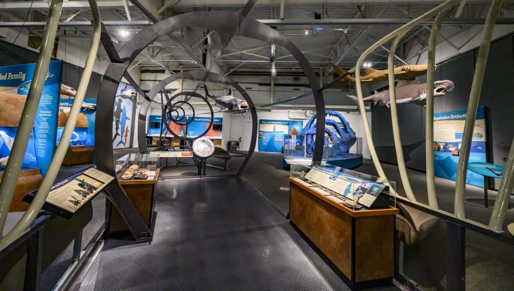 inside the large metal shark shaped structure in a museum exhibit with display cases