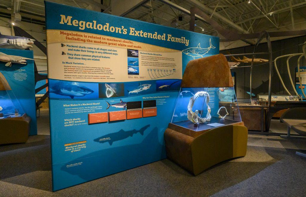 museum exhibit panel showing several shark species