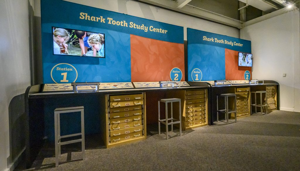 museum station with desks for examining shark teeth