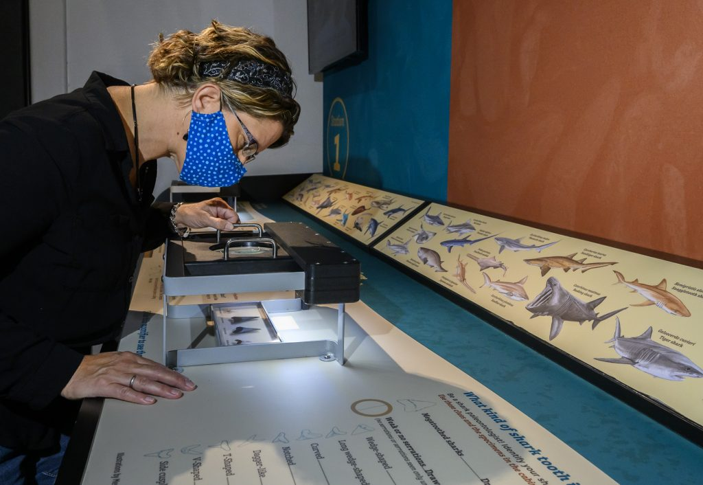 visitor looking at shark teeth on a museum display