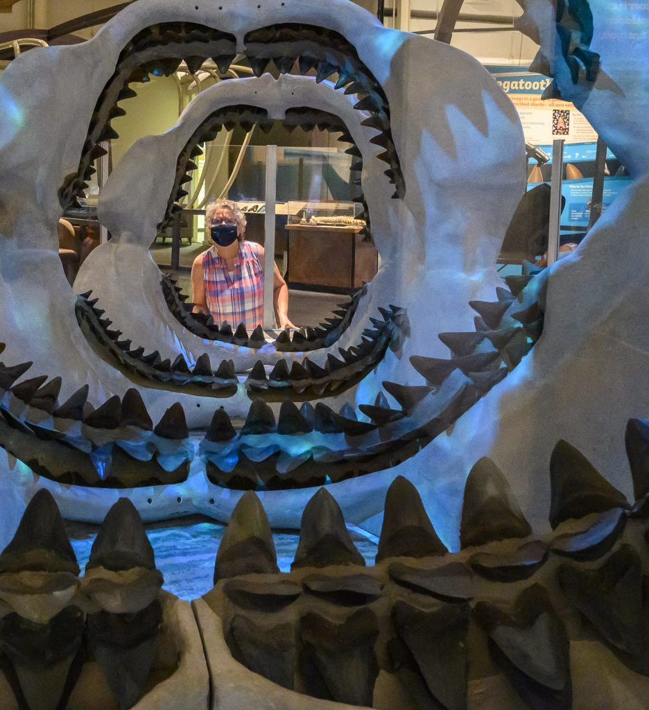 visitor looking through several layers of shark jaws on display