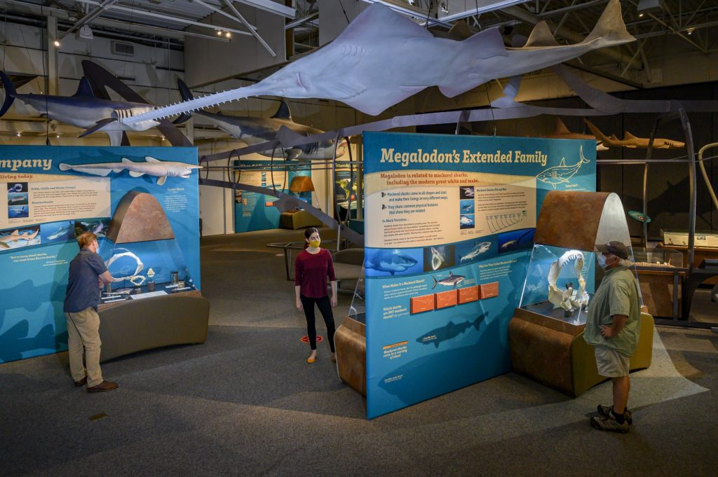 several visitors looking at shark display cases in an exhibit