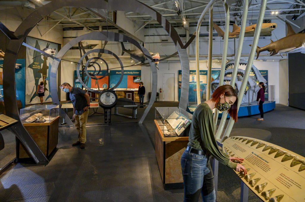 visitors in a museum exhibit looking at shark teeth displays