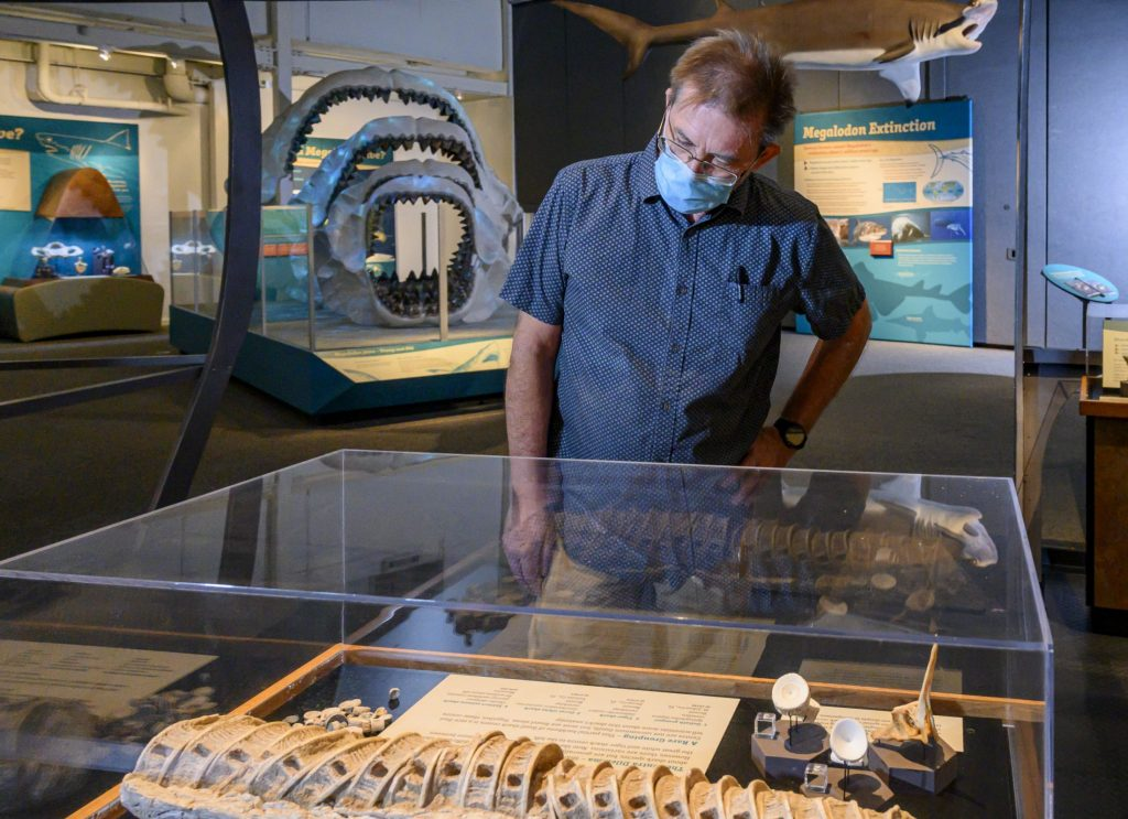 museum visitor examines shark fossils in a display case