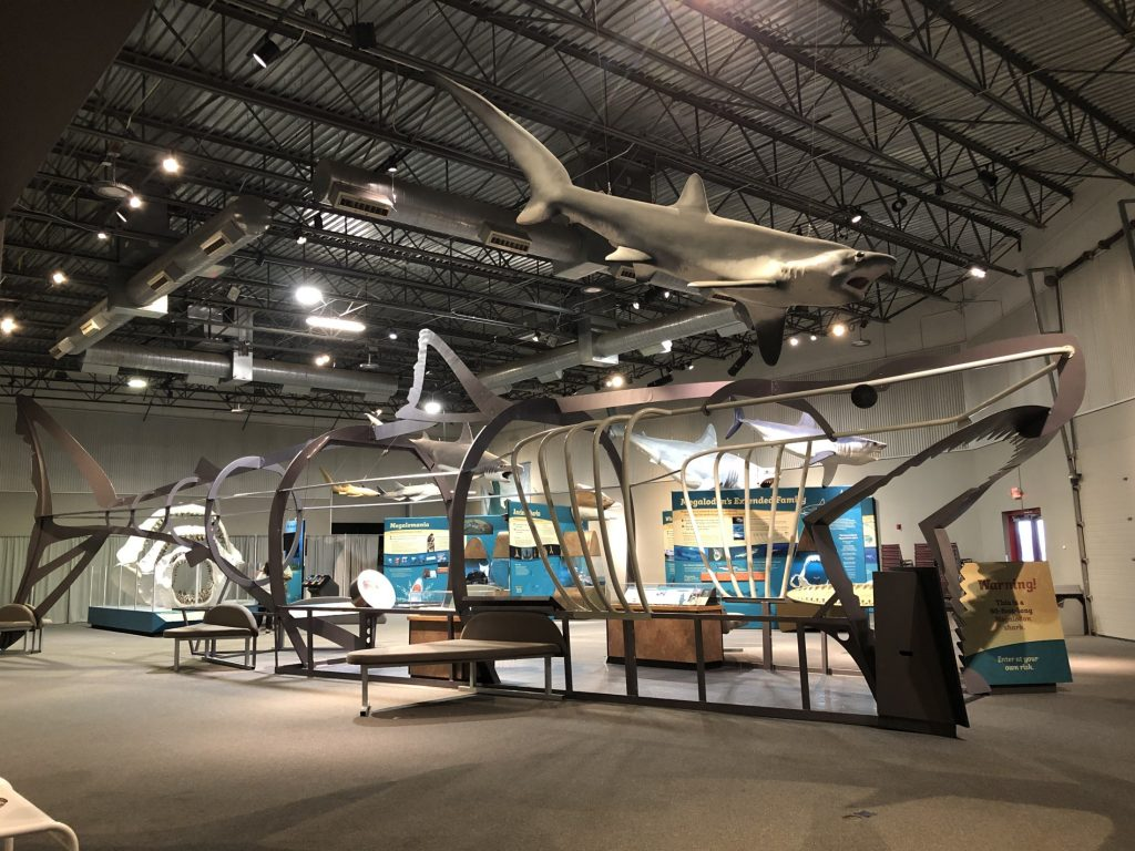 a large metal shark shaped structure in a museum exhibits