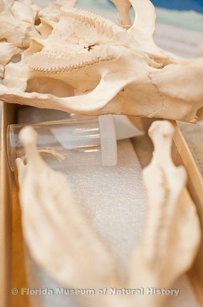 specimen skulls