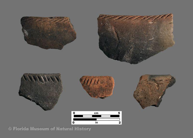 Fort Drum Incised (Glades series)