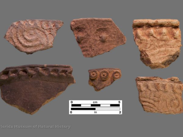 6 sherds with complicated stamping and punctated or applied rims