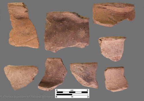 8 rim sherds of plain shell tempered pottery