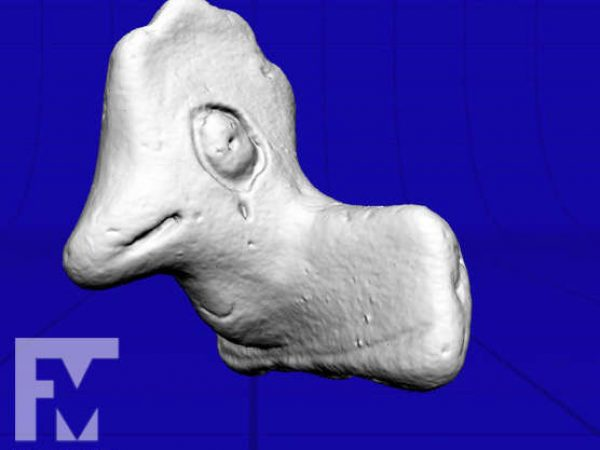3D scan of Fort Walton period bird effigy