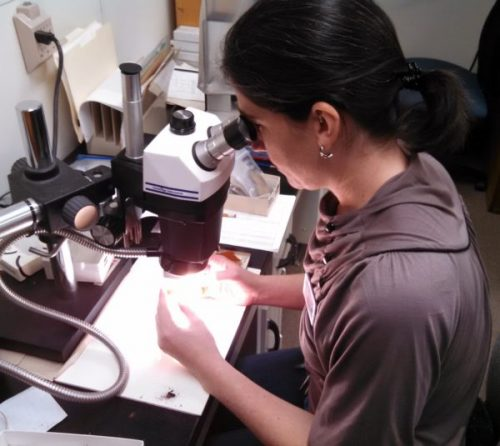 Lindsay at microscope