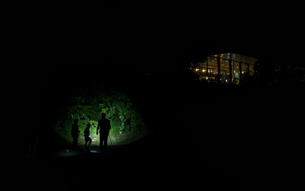 people walking at night near the Selva Verde Lodge.