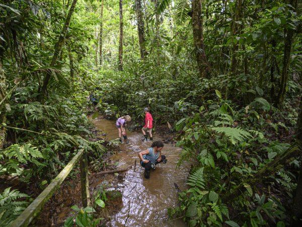 Kids in a stream in a rainforest in Costa Rica