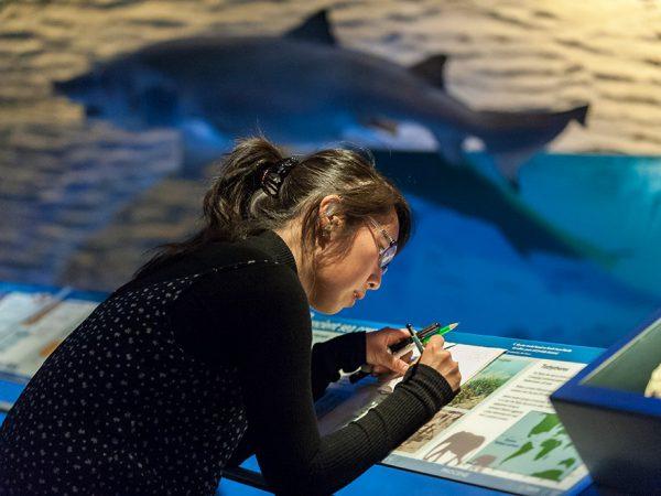 woman sketching in front of shark exhibit panel