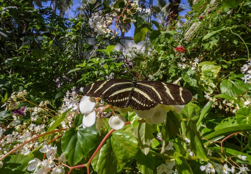 black and yellow striped butterfly sitting on abundant foliage
