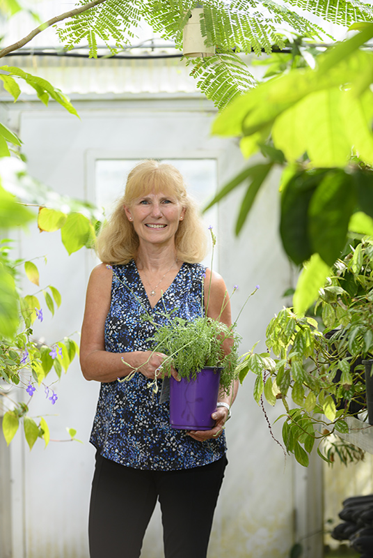 woman stands in greenhouse holding a plant in a purple pot