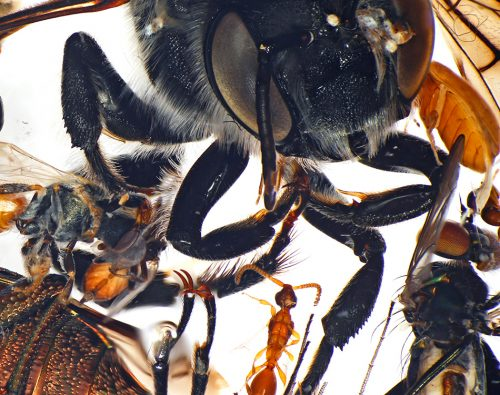 many insects under a microscope