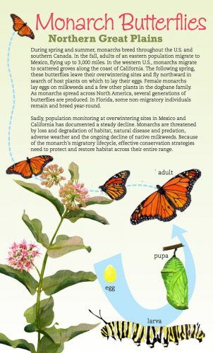 Monarch and Milkweed Northern Great Plains brochure cover