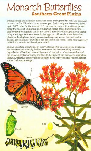 Monarch and Milkweed Southern Great Plains brochure cover