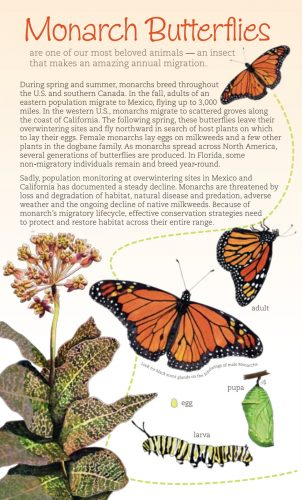Monarchs and Milkweeds Southern U.S. brochure cover