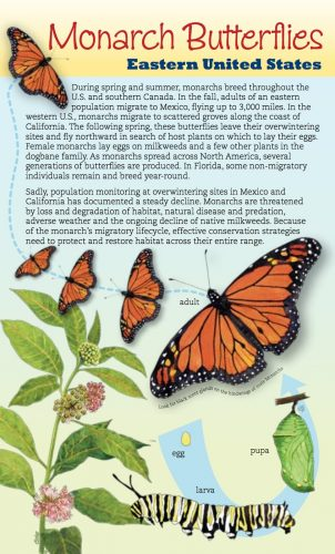 Monarchs and Milkweeds Eastern U.S. brochure cover