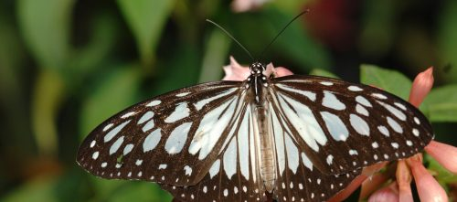 Frequently Asked Questions Discover Butterflies Moths