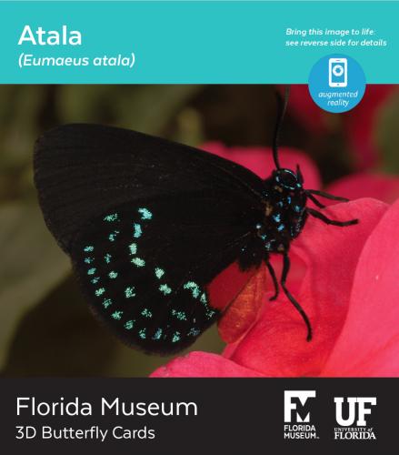 Atala butterfly 3D card