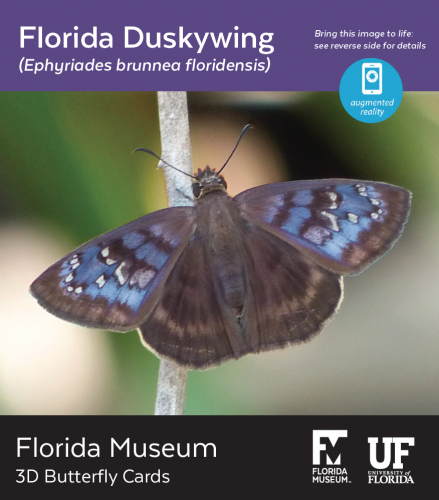 Florida Duskywing butterfly 3D card