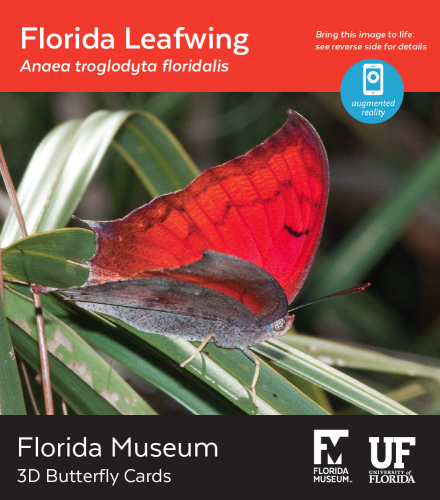 Florida Leafwing butterfly 3D card
