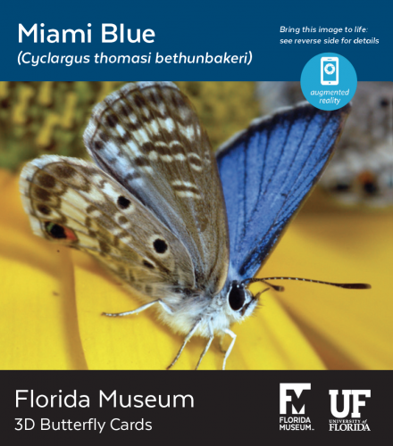 Miami Blue butterfly 3D card