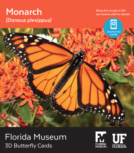 Monarch butterfly 3D card
