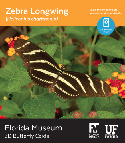 Zebra Longwing butterfly 3D card