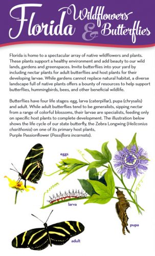 Florida Butterflies and Wildflowers brochure cover 2018