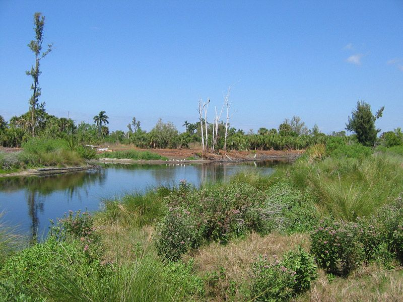 Ibis Pond at Calusa Heritage Trail
