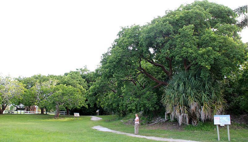 At the Calusa Heritage Trail