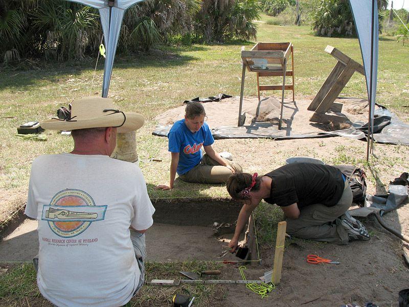 2011 excavations