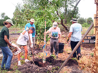 Volunteers help plant trees