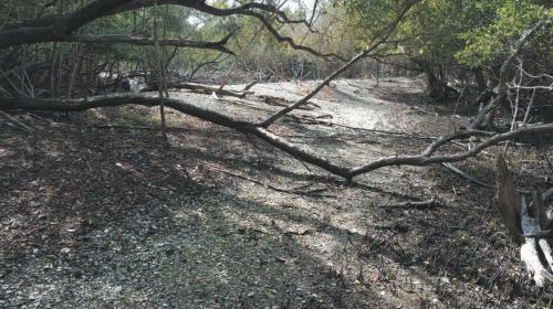 water courts at Mound Key