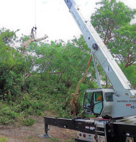 gerad saws tree 2017