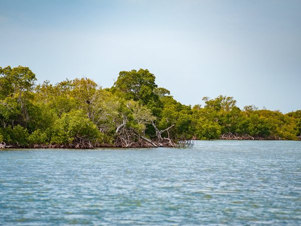 coastal island forest at waters edge