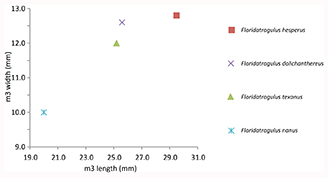 Figure 5. Bivariate plot of the size variation in the lower third molar of species of Floridatragulus.