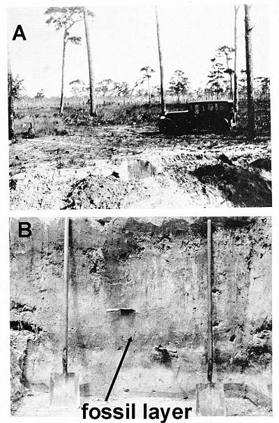 excavation cross section
