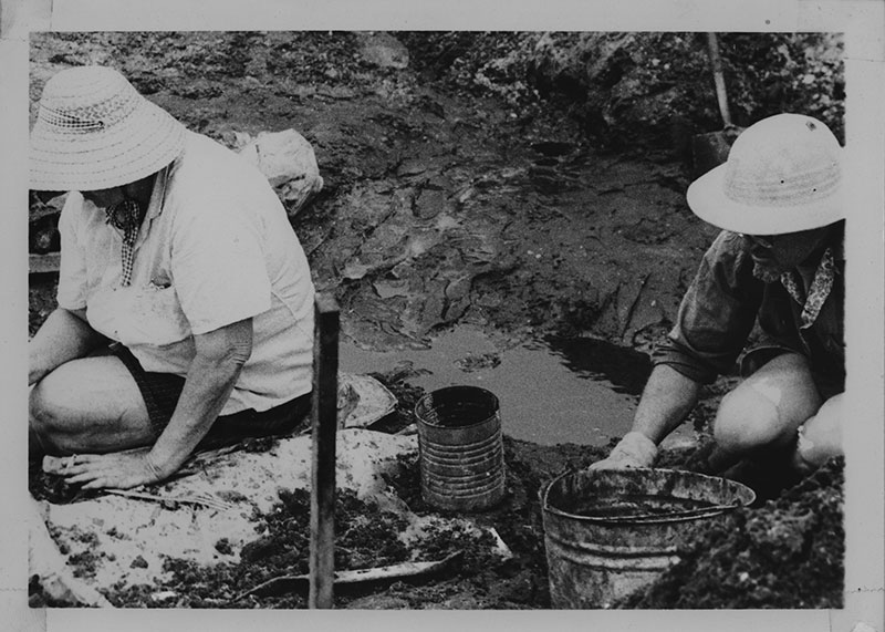 Figure 1. Two fossil diggers at the West Palm Beach Site. Note the dark color of the fossil-bearings layer being excavated.