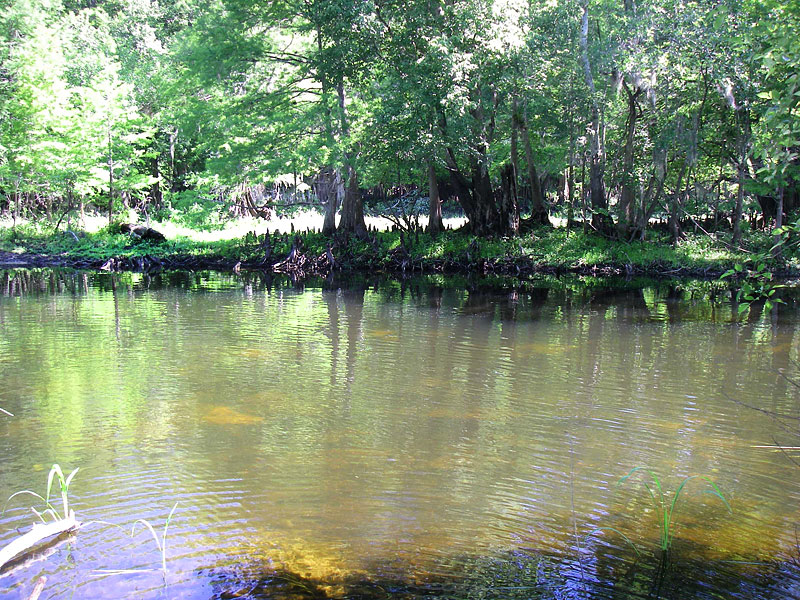 Figure 2. Withlacoochee River 1A locality.