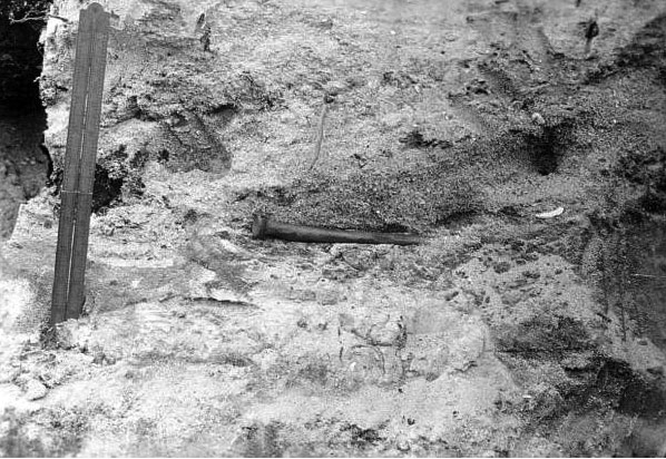 Figure 1. Fossil human bone exposed in Stratum 2 on side of drainage canal at Vero Canal Site, 1916. Photo credit: State Archives of Florida, Florida Memory.