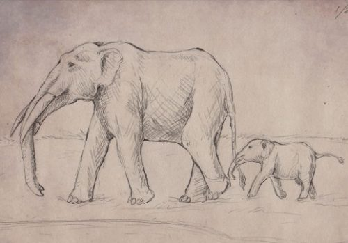 drawing of gomphothere mother and baby