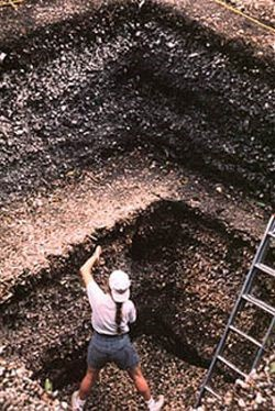 Pineland_excavations