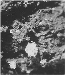Figure 15.4. Calcium sulfate crystals, Page-Ladson Stratum 2A. Photo by Aucilla River Prehistory Project.