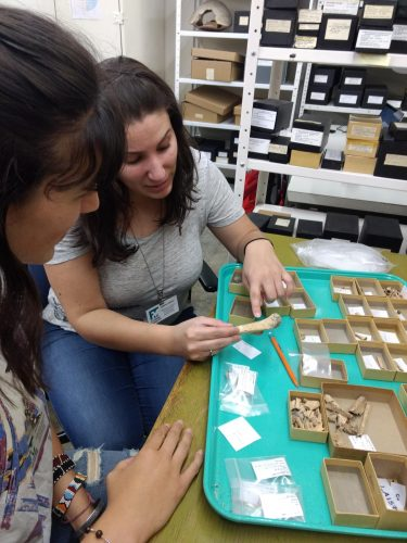 Arianne Boileau and her mentee Savannah Hall discussing bone identifications